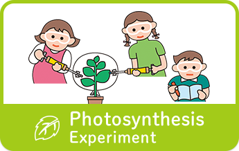 Photosynthesis Experiment