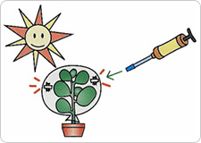 Leave the plant exposed to direct sunlight for several hours, and then respectively measure the oxygen as well as the carbon dioxide concentrations and record the values.